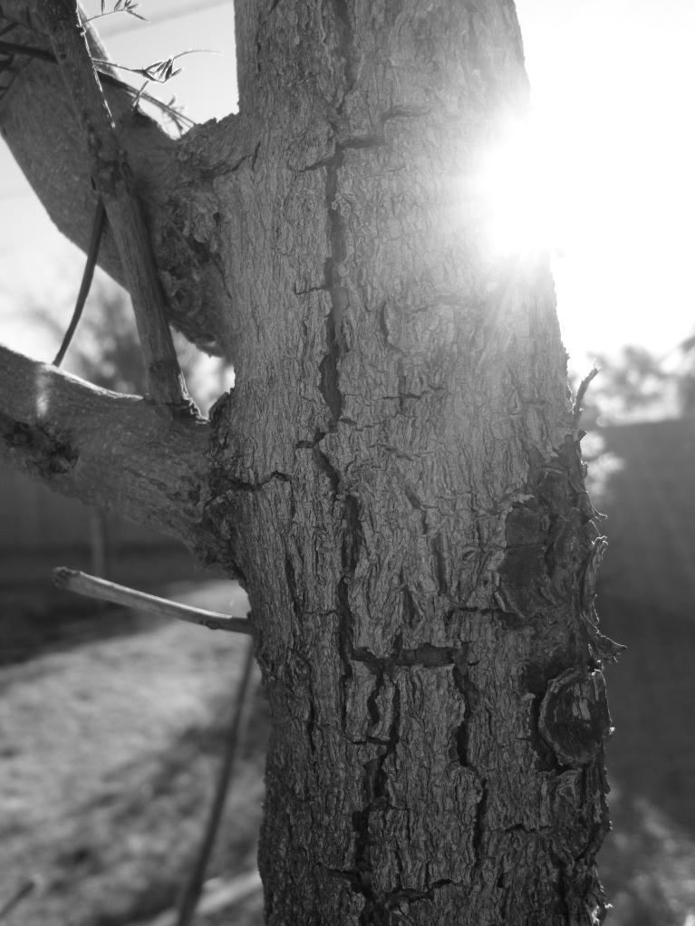 Detail of poor naked jacaranda tree