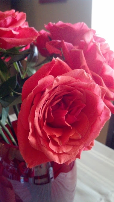 My roses blossomed so beautifully...