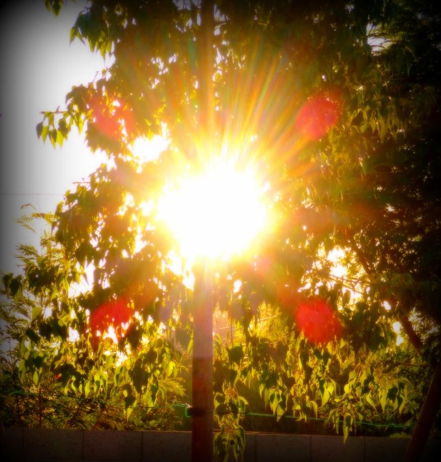 Sunlight through our Australian bottle elm